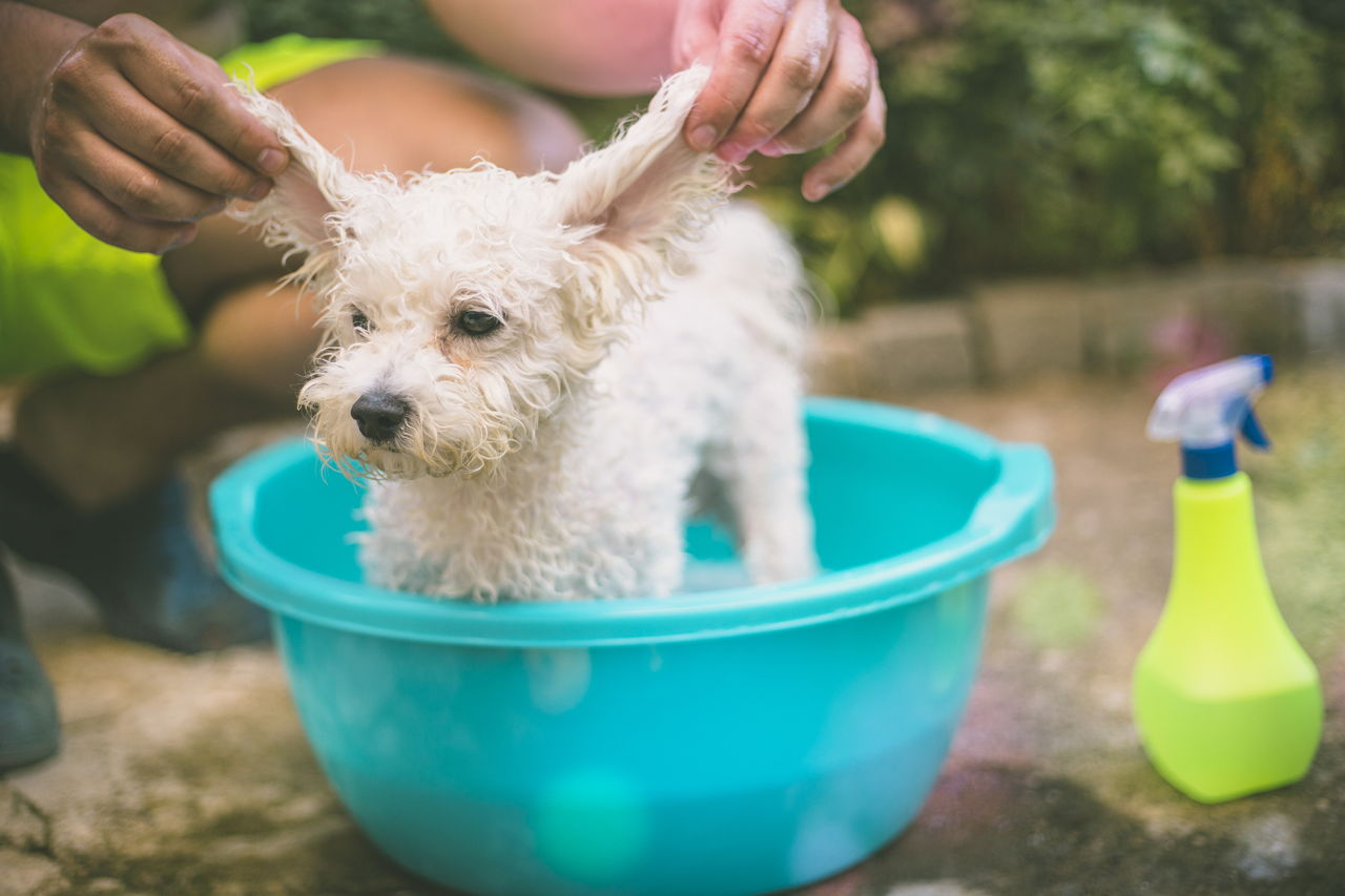 Treatment and Prevention of Mange For Dogs